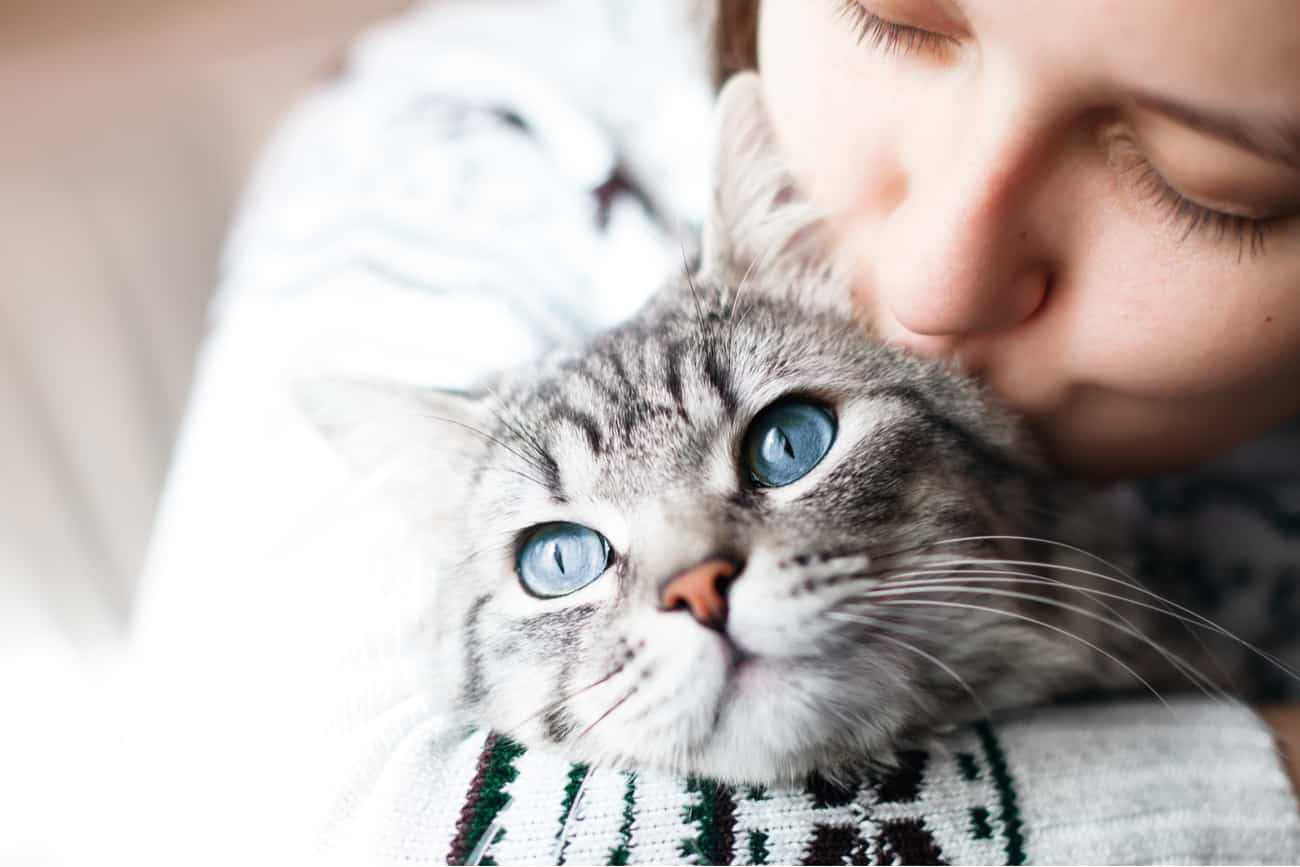 Cat being affectionate with person