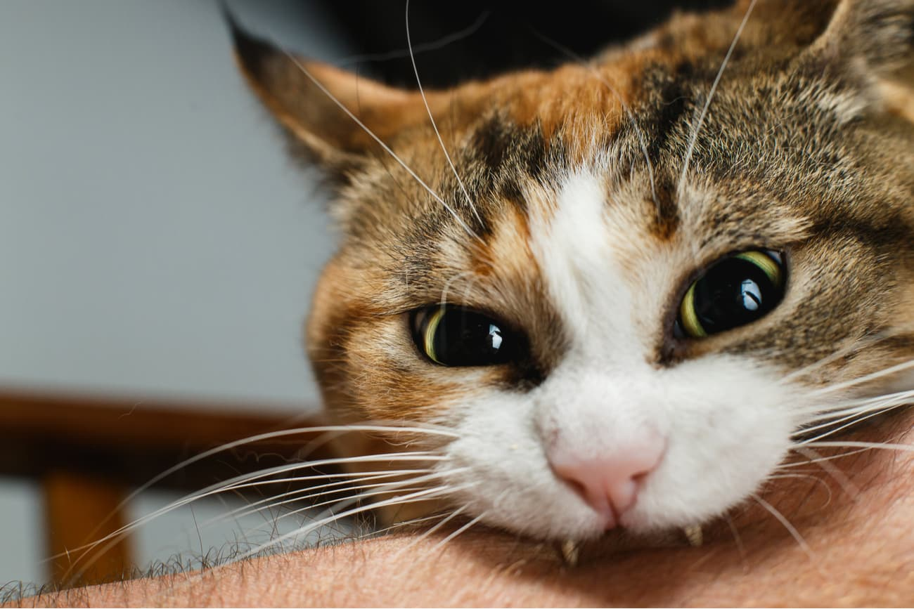 Cat biting a person's arm