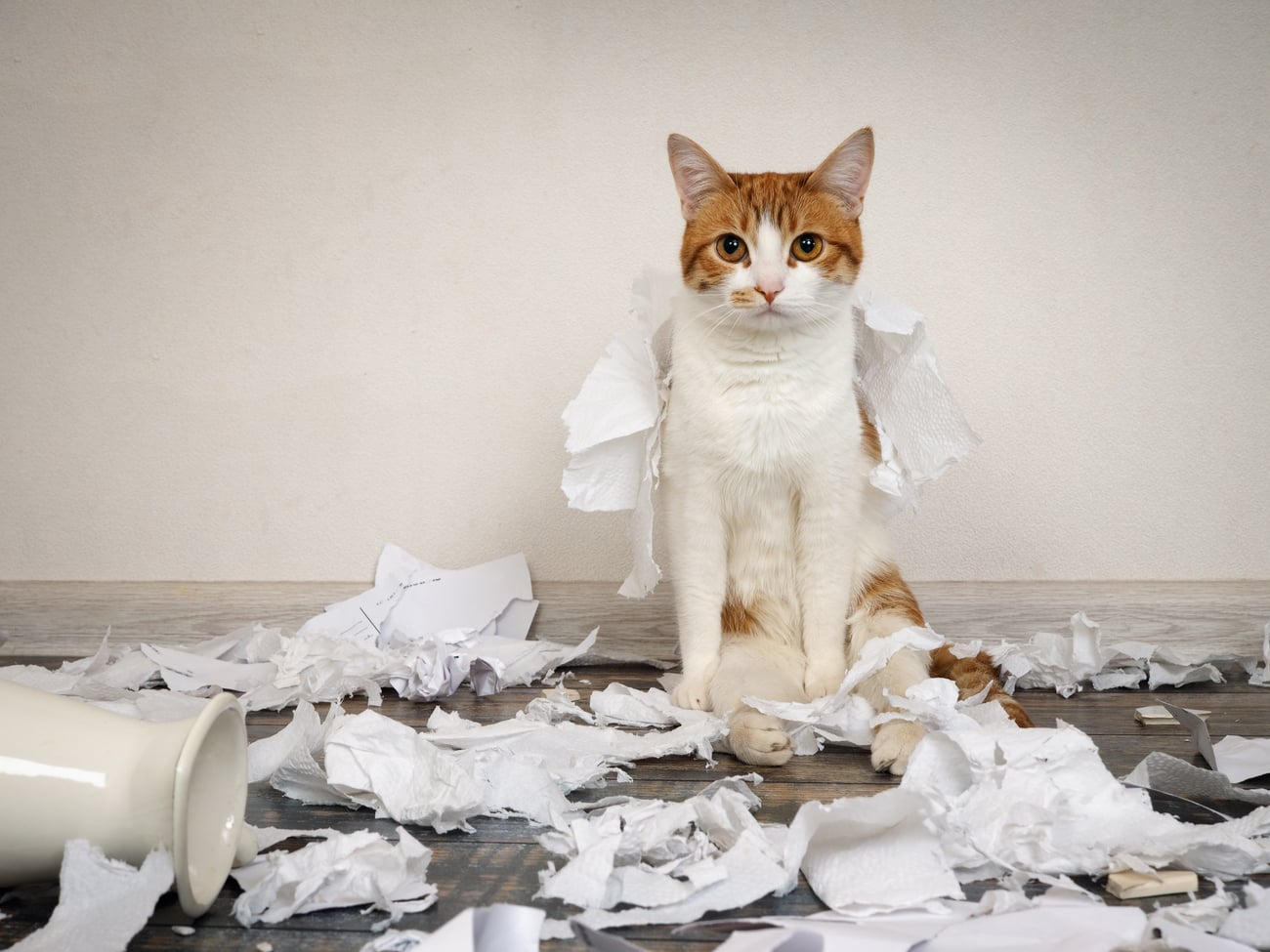 Cat made a mess with paper
