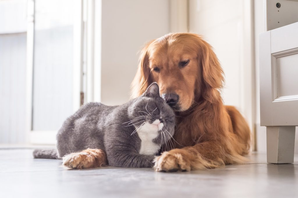 Cat being friendly with dog