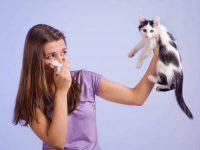 hypoallergenic cat with person