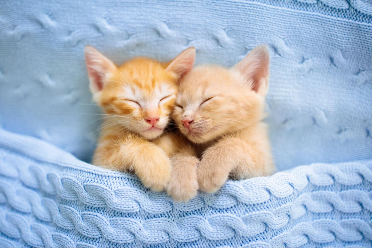 Male and Female cat
