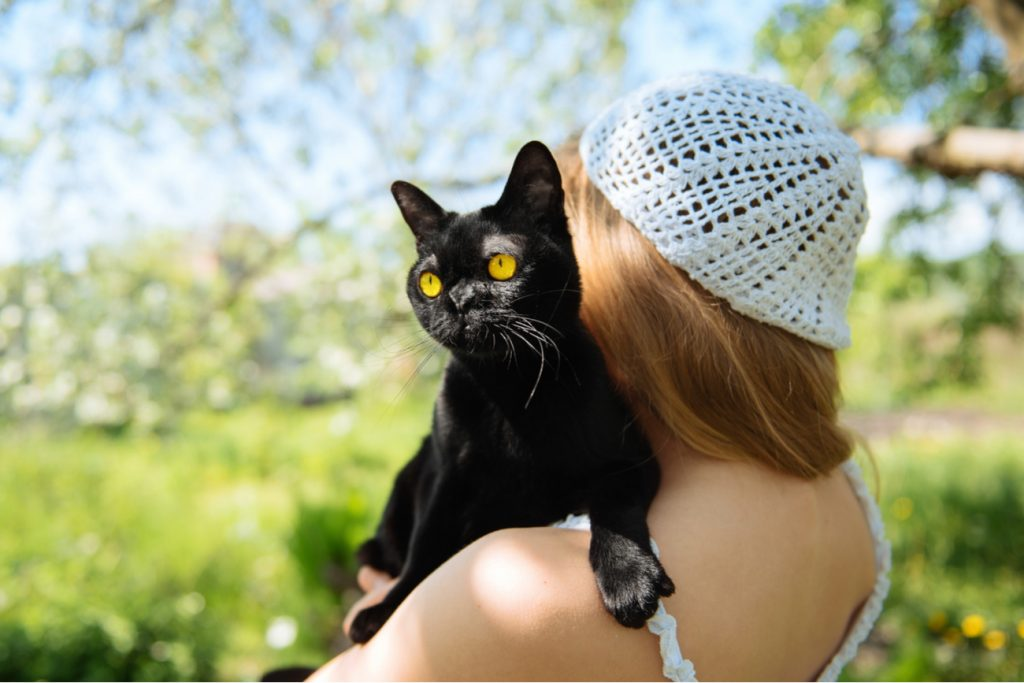 bombay cat on womans shoulder
