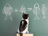 Smart cat breeds
