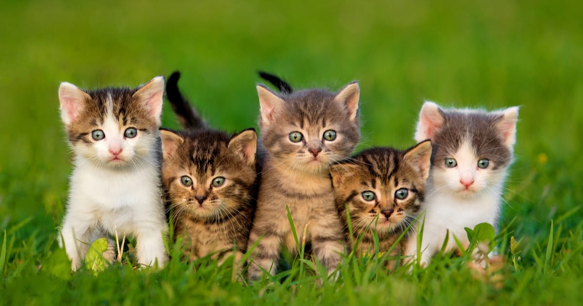Cat Breeds A Z Ultimate Guide Purrfect Cat Breeds